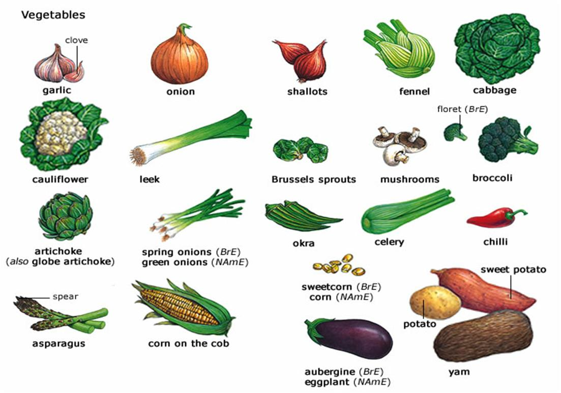 Vegetables List FOOD AND COOKING | My ...