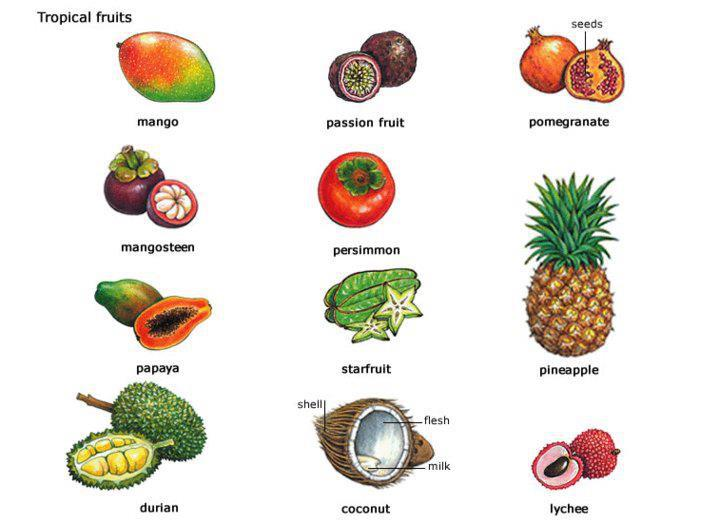 Food Vocabulary List In English Pdf